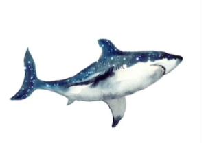 Omega Shark - pantip - พันทิป - รีวิว